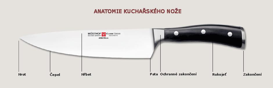 anatomie nože